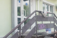 Магазин озон Пенза ул.  Урицкого дом. 74 реставрация фасада